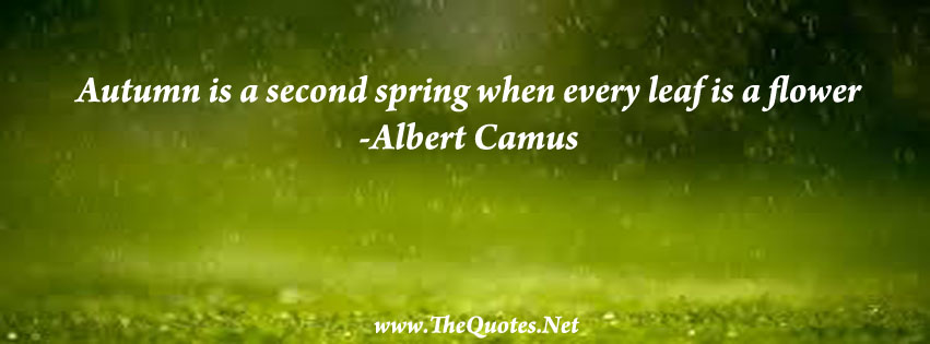 Facebook Cover Image - Albert Camus Quote - TheQuotes.Net