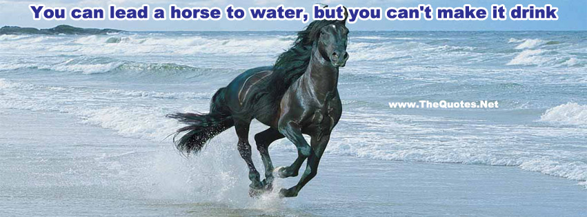 you can lead a horse to Yes, the saying you can lead a horse to water, but you can't make him drink is true, but you'll never know unless you first bring him to the water and if you know a horse that is thirsty, bring him to the water and he will drink.