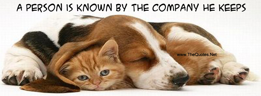 Facebook Cover Image Cat And Dog Thequotes Net