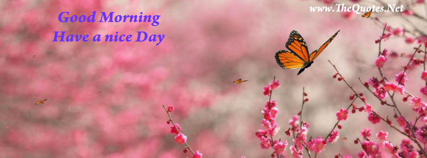 Facebook Cover Image - Beautiful Butterfly - TheQuotes.Net